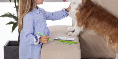 ochrona mebli przed zwierzętami